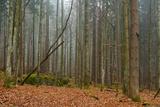 A Foggy Bavarian Forest in Autumn