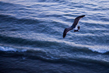 Baja California  Mexico: A Seagull from Above