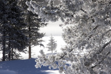 A Scenic Landscape of Snow-Covered Trees and Ground