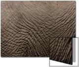 Tanzania  Africa: an Elephant's Hide