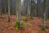 A Foggy Bavarian Forest in Autumn