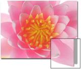 A Water Lily Flower Close Up Acrylique par Robert Llewellyn