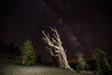 A Bristlecone Pine and the Milky Way