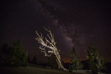 California: A Bristlecone Pine and the Milky Way