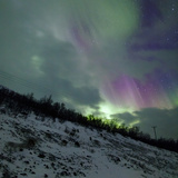 Aurora Borealis Above Reindeer in a Snow-Covered Winter Landscape