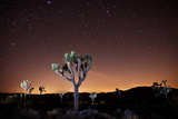 Joshua Tree National Park  California  United States: Star Trails over a Joshua Tree at Night