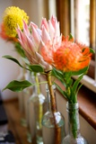 Protea Flowers Decorate a Home in the Woodstock Neighborhood of Cape Town  South Africa