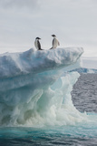 A Pair of Adelie Penguins Stand on the Edge of an Iceberg