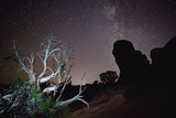 Moab   Arches National Park: A Dead Juniper Tree in Arches National Park with the Milky Way