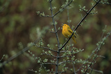 A Warbler Sings in a Tree