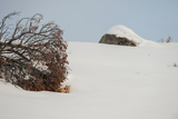 A Red Fox Rests under a Tree in a Snowy Landscape
