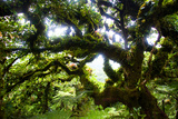 Cocos Island  Costa Rica: the Cloud Forests of Cocos Island Give the Trees a Fuzzy Appearance