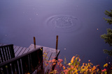 Ely  Minnesota: Bubbles Rise Where a Swimmer Dove into the Cold Lake