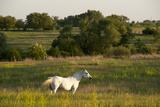 A Horse Grazes Near Denton  Nebraska