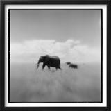 Elephant Herd  Masai Mara Game Reserve  Kenya