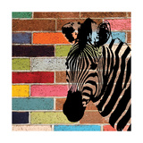 Brick Wall Zebra