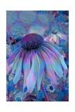 Cone Flower  Blue  Blue Flower  Echinacea