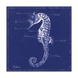 Blueprint Seahorse