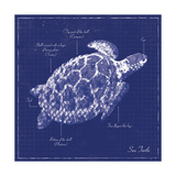 Blueprint Sea Turtle