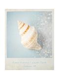 Beach Memories Small Conch