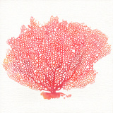 Watercolor Coral II