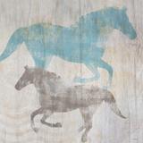 Equine II
