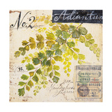 Maidenhair Fern…Sketchbook