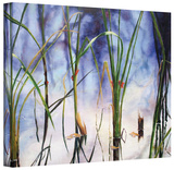 Mystic Pond  Gallery-Wrapped Canvas