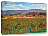 Vineyard In Autumn  Gallery-Wrapped Canvas