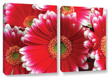 Lots A Daisies   2 Piece Gallery-Wrapped Canvas Set