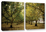 Fall Orchard  2 Piece Gallery-Wrapped Canvas Set