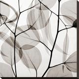 Eucalytus Leaves [Positive]