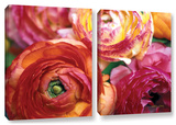 Ranunculus Close Up  2 Piece Gallery-Wrapped Canvas Set