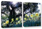 Daffodils And The Oak  2 Piece Gallery-Wrapped Canvas Set
