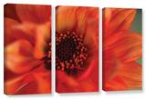 Fiery Dahila  3 Piece Gallery-Wrapped Canvas Set