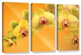 Yellow Phalaenopsis  3 Piece Gallery-Wrapped Canvas Set