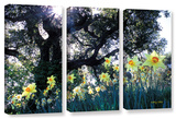 Daffodils And The Oak  3 Piece Gallery-Wrapped Canvas Set