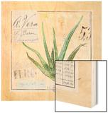 Aloe VeraSketchbook