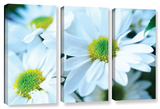 Fresh Daisies  3 Piece Gallery-Wrapped Canvas Set