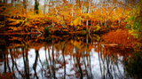 Fall Pond Colors 2