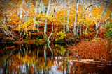 Fall Pond Colors 1