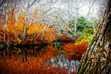 Fall Pond Colors 3