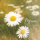 Daisy Dreams