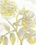 Belle Fleur Yellow I Crop