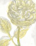 Belle Fleur Yellow III Crop