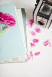 Pink Flower with Books and Camera