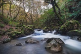 Stream Flowing Through Woodland in England