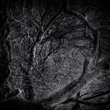 Close Up of Trees Papier Photo par Rory Garforth
