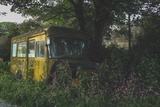 Old Bus in Woodland