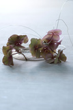 By the Wire - Still Life Image of Hydrangea Petals and Delicate Wire